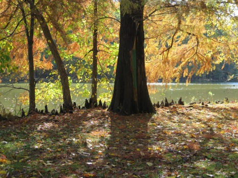 Willowbrook Park (fall 2015). Photo: Greg Perosi for Life-Wire News Service.